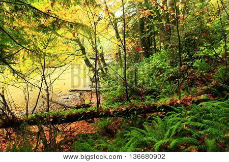 a picture of an exterior Pacific Northwest forest in fall