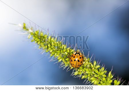 Ladybird in garden, close up, macro background