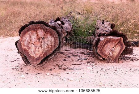 Old timber in a meadow, Tree rings log wood tree trunk.