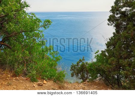View through branches on the sea. frame with branches.