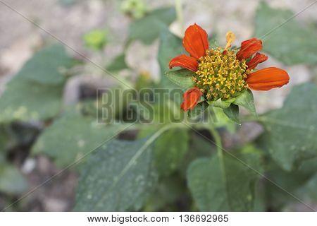 zinnias flowers nature, silhouette, background, beautiful, summer