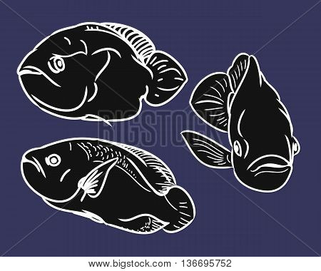 Contour aquarium fish. The set of images in the form of three fish. Vector illustration on blue background - fish swims