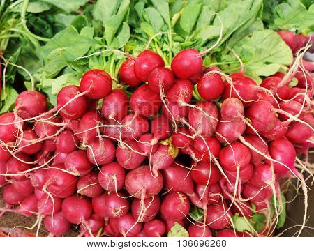 Red radish on market. Close up, top view