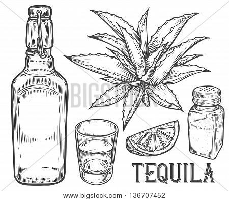 Tequila Botlle And Glass. Cactus Agave, Salt And Lime. Hand Drawn Sketch Set Of Alcohol Drink Tequil