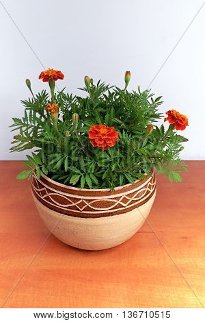 Afrikana flowers in a stone pot on a wooden table