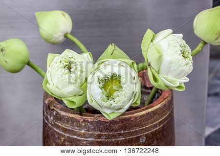 beautiful lotus flowers in vase for pay respect to Buddha