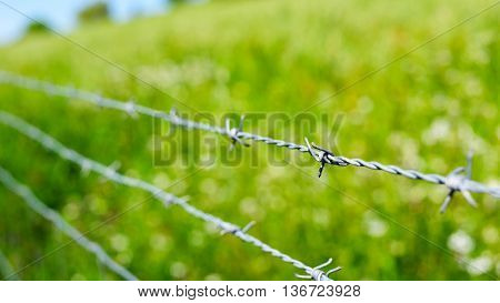 close up of a barb wire in a green field