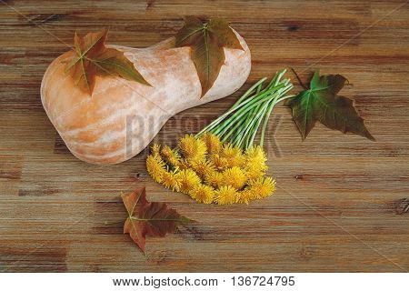Background from Pumkin,Green Leaves,Bunch of Dandelions on the Wooden Table.Autumn Garden's Vegetables.Top View
