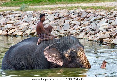 Elephant Swimming