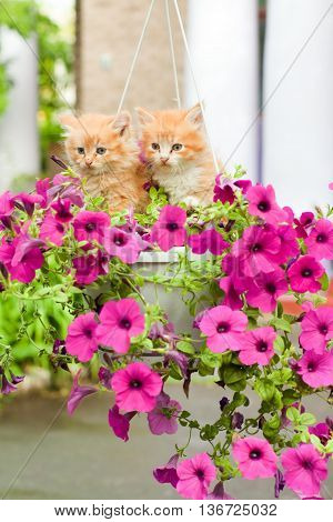 two cute young cats between pink flowers