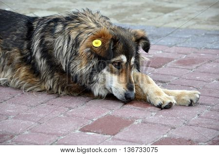 Homeless dog on the  street of town