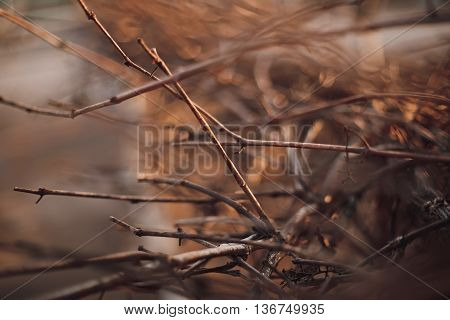 blurriness background. withered leaves close up .