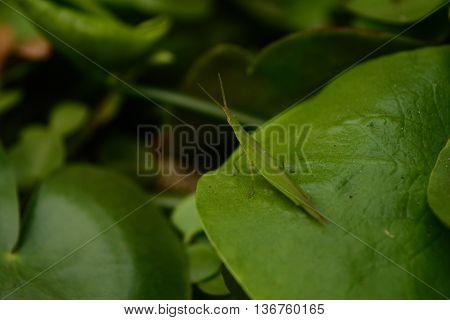 seekor belalang yang hinggap di atas daun