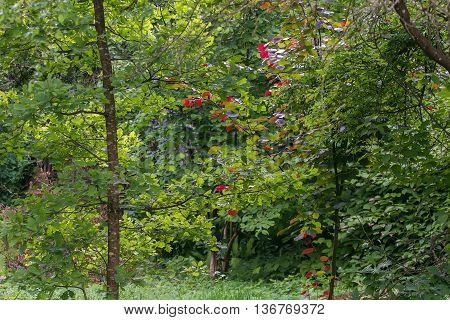 Trees With Colorful Leaves