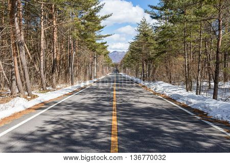 Beautiful winter forest with car road