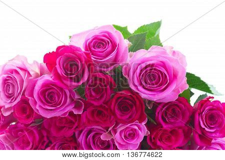 bouquet of pink and magenta roses border isolated on white background