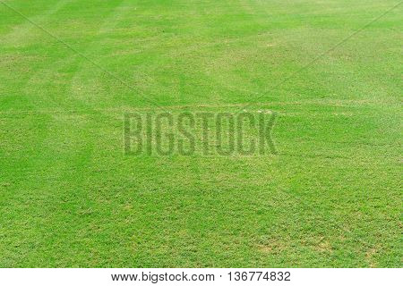 Greensward field background and wallpaper, landscape wallpaper
