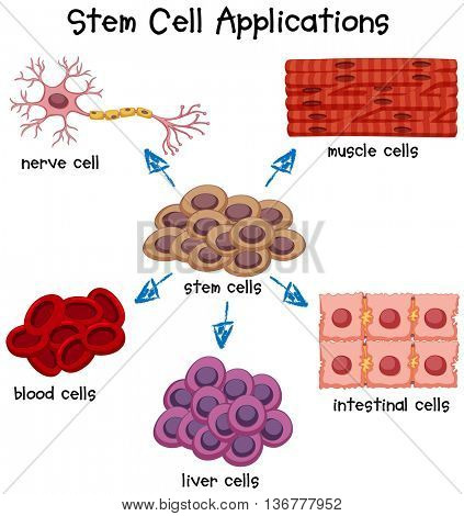 Poster showing different stem cell applications illustration
