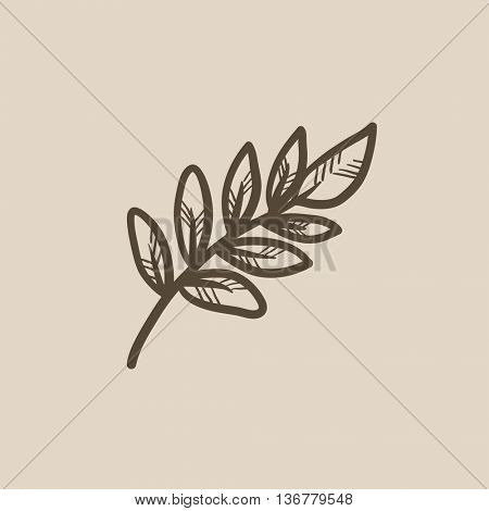 Palm branch vector sketch icon isolated on background. Hand drawn Palm branch icon. Palm branch sketch icon for infographic, website or app.