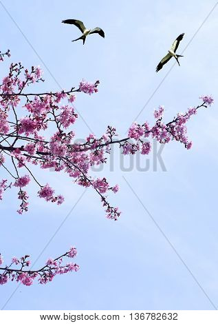 Tree in full pink blossom and birds on a sunny day in spring vertical image
