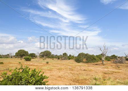 Tsavo East Landscape In Kenya