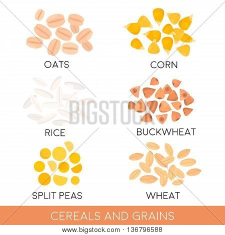 Cereals and grain oats rice corn split peas wheat buckwheat isolated. Vector illustration