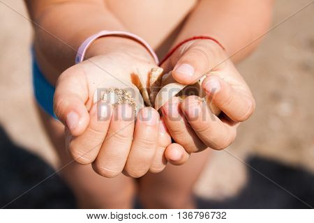 Children's hands hold a close-up shells of mollusks