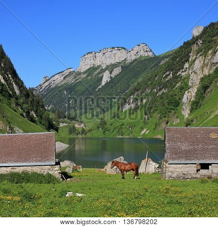 Summer scene at lake Fahlensee. Mountains of the Alpstein Range Appenzell Canton. Sheds and horse.