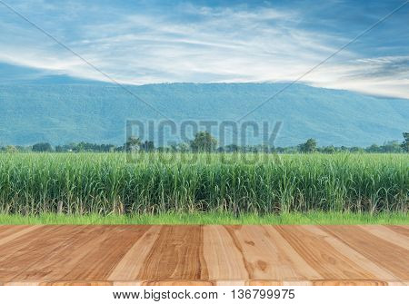 Wood table top sugarcane field with blue sky summer concept - can be used for display or montage your products