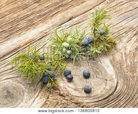 Common Juniper (Juniperus communis) fruits on wood