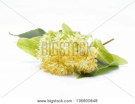 Linden (also known as lime and basswood) flowers