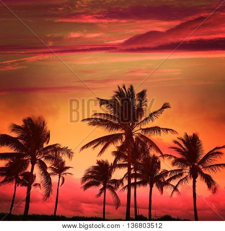 Miami Beach South Beach sunset palm trees in Ocean Drive Florida