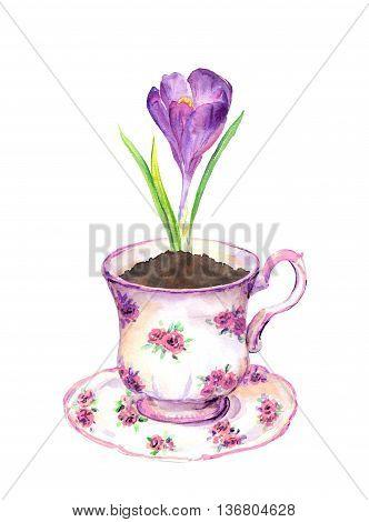 Violet crocus flower in tea cup. Watercolor