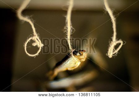 Smoked capelin fish hanging on the gallows above the plate