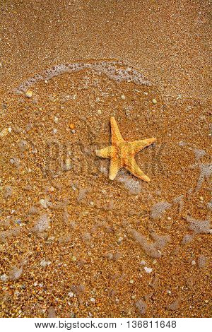 SEa star in the water on the edge of sea and land with copyspace