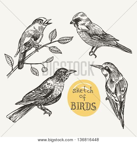 Beautiful hand drawn vector  illustration set of birds. Sketch style drawing.