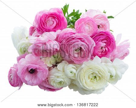 Posy of pink and white ranunculus flowers isolated on white background