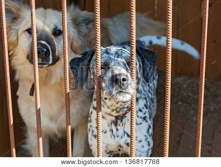 Two big dogs in a cage of a shelter