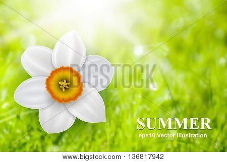Summer flower background over green defocus backdrop, vector illustration.