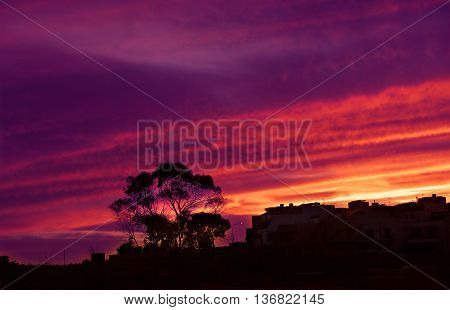 Violet pink red amazing sunset in Marsaxlokk, Malta. Colourful dramatic sunset with tree and buildings silhoutte