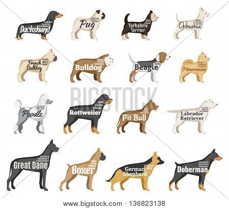 Vector dog breeds illustration with names and personality description isolated on white for dog club pet clinic and shop.