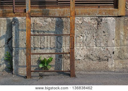 A rusty iron ladder on the background of the gray wall and shoots of green break through the asphalt.