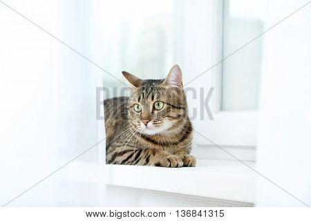 Beautiful Cat Lying On The Windowsill, Close Up