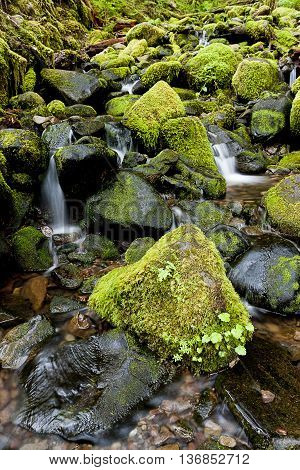 Moss covered rocks and a cascading stream in the Olympic Peninsula in Washington.