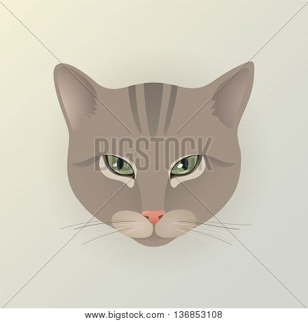 Portrait of a lady striped cat. Cute characters cat in japanese style. Dodgy cat. Angry cat. Flat minimal design style with pastel gray color. Cartoon vector illustration.