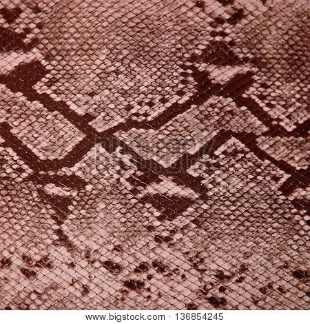 Snake skin texture, background, close up .