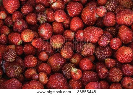 harvest fresh and ripe strawberry background wallpaper