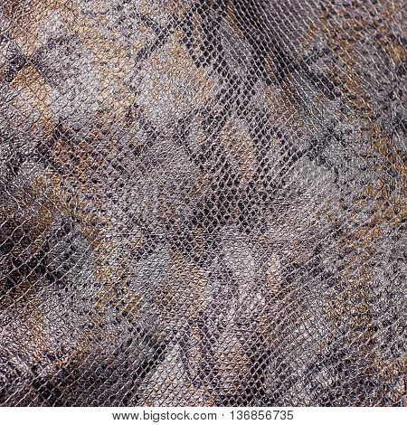 Snake skin reptile close up. background, texture.