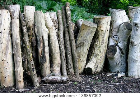 Some larger number of stored standing tree trunks