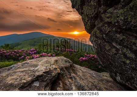 Vibrant Sunset Behind Jane Bald Rhododendron in the Blue Ridge mountains